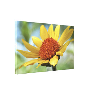 Canvas Wrap: Sun Flower