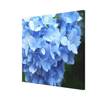 Canvas - Wrapped - Blue Hydrangea