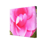 Canvas - Wrapped - Dark Pink Camellia 1 Gallery Wrap Canvas