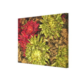 Canvas - Wrapped - Fall Flowers