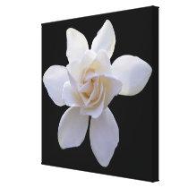 Canvas - Wrapped - Gardenia on Black