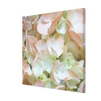 Canvas - Wrapped - Peachy Hydrangea
