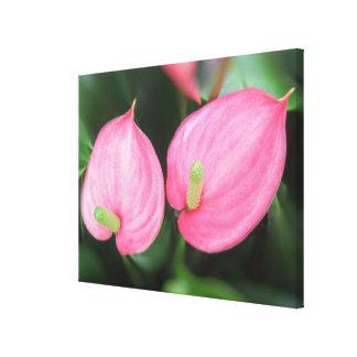 Canvas - Wrapped - Pink Anthurium Twins Canvas Print