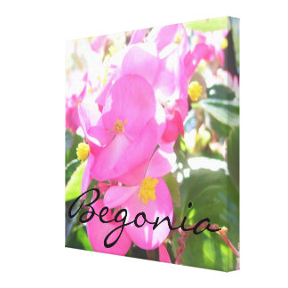 """Canvas - Wrapped - Pink, Sun-Dappled """"Begonia"""""""