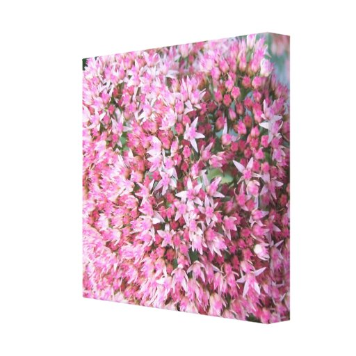 Canvas - Wrapped - Showy Stonecrop Gallery Wrapped Canvas