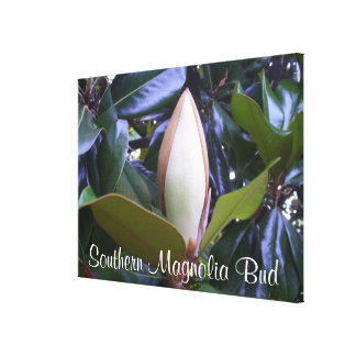 Canvas - Wrapped - Southern Magnolia Bud Stretched Canvas Print
