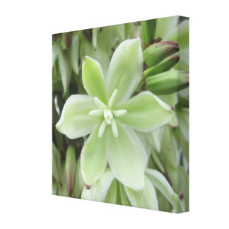 Canvas - Wrapped - Yucca Flower Canvas Print