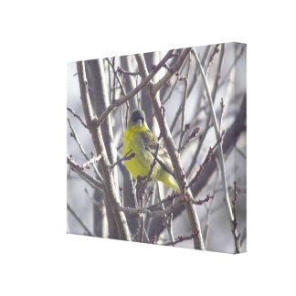 Canvas - Yellow Finch in Winter Branches
