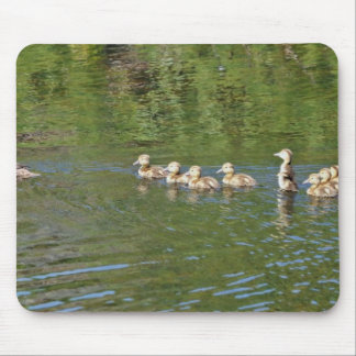 Canvasback brood mouse pad