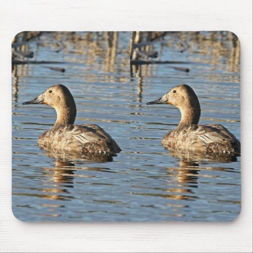 Canvasback hen mouse pads