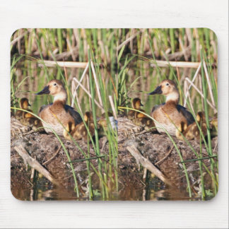 Canvasback on nest mouse pad