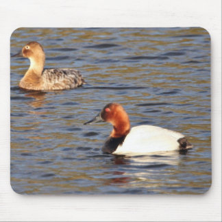 Canvasback pair mousepad