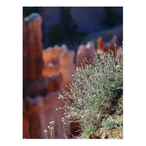 Canyon Landscape Postcards