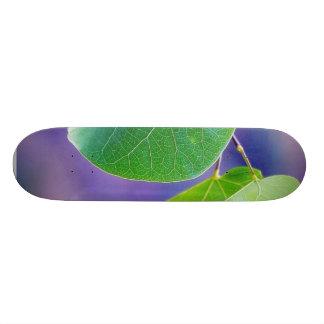 Canyon Leaves Skate Board Decks