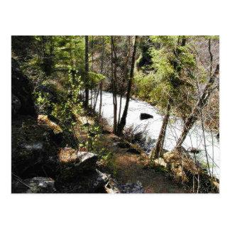 Canyon Stream Trees Kootenai On Hill Postcard
