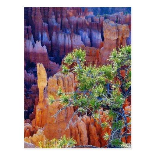 Canyon Tree Postcard
