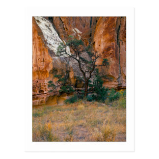 """Canyon View With Tree"" Postcard"