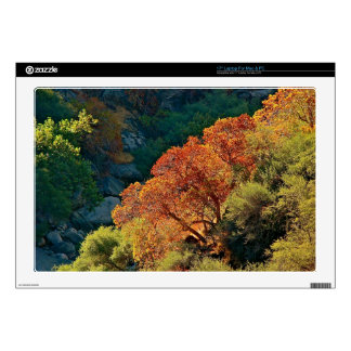 """CANYON WITH TREES IN THE FALL 17"""" LAPTOP DECALS"""