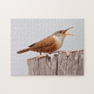 Canyon Wren (Catherpes Mexicanus) Singing Puzzle