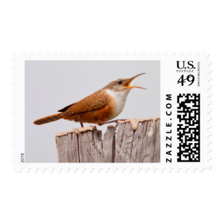 Canyon Wren (Catherpes Mexicanus) Singing Stamp