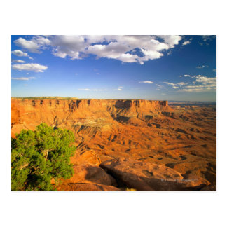 Canyonlands National Park, Utah, United States Postcard