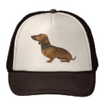 Cap dashound mesh hats