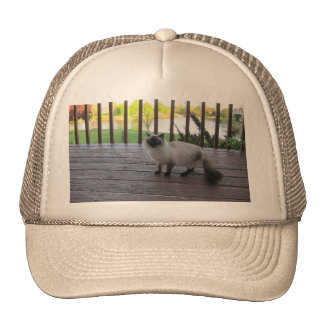 cap with a cat picture trucker hat