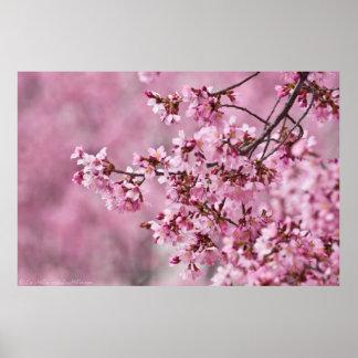 Capas del rosa en colores pastel de las flores de póster