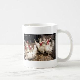 Capas gallinas y pollos tazas