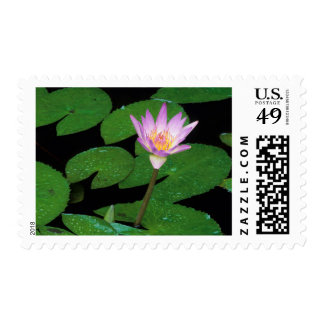 Cape Blue Water Lily (Nymphaea Capensis) Postage Stamp
