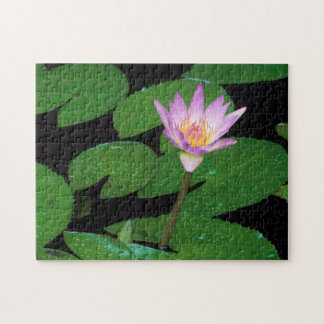 Cape Blue Water Lily (Nymphaea Capensis) Puzzle