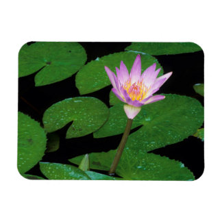 Cape Blue Water Lily (Nymphaea Capensis) Rectangular Photo Magnet