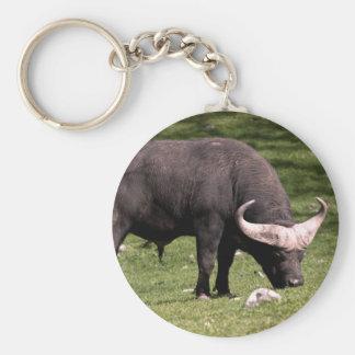 Cape Buffalo Eating Keychain