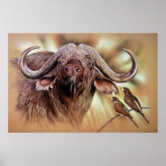 Cape Buffalo & Oxpeckers Poster