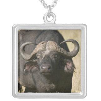 Cape Buffalo (Syncerus caffer), Masai Mara Necklace