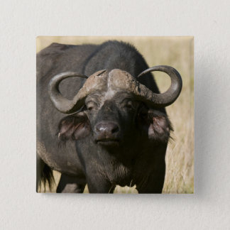 Cape Buffalo (Syncerus caffer), Masai Mara Pinback Button