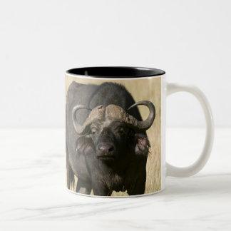 Cape Buffalo (Syncerus caffer), Masai Mara Two-Tone Coffee Mug