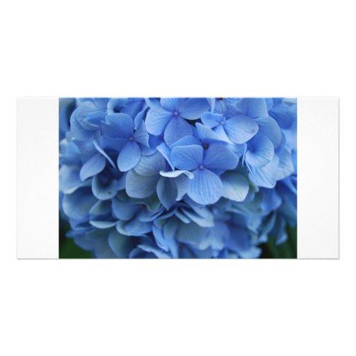 Cape Cod Hydrangea Photo Card