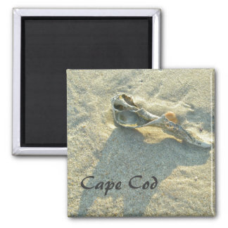 Cape Cod Massachusetts - Shell y resaca Imán