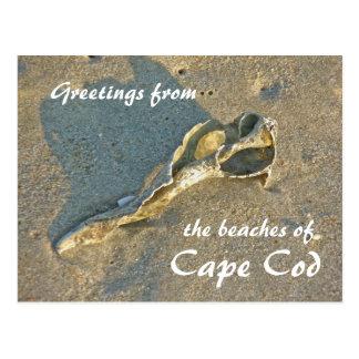 Cape Cod Massachusetts - Shell y resaca Postal