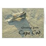Cape Cod Massachusetts - Shell y resaca Tarjeton