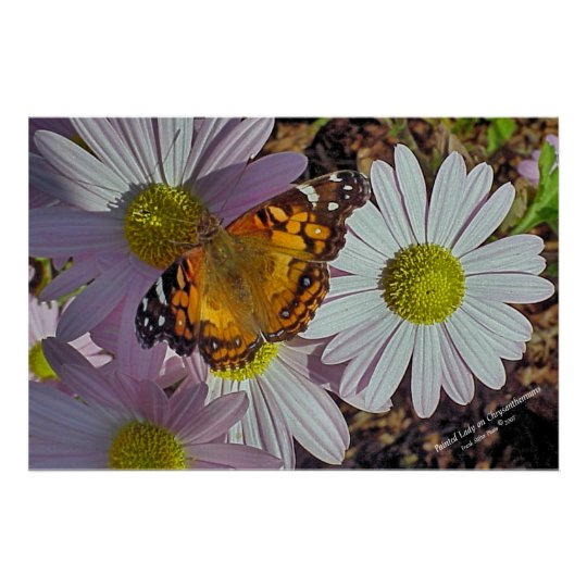 Cape Cod Painted Lady Butterfly Poster