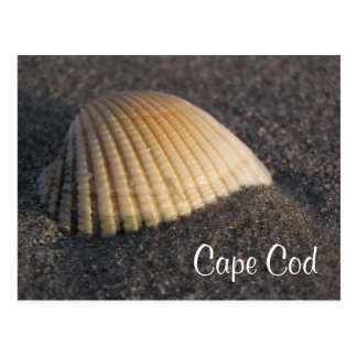 Cape Cod Seashell on the Beach Post Card