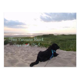 Cape Cod Sunset with Black Lab Postcard