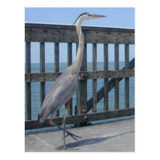 Cape Coral Florida postcard