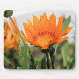 cape daisy mousepads