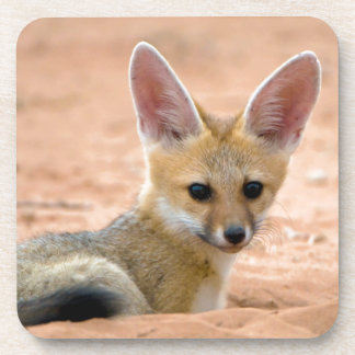 Cape Fox (Vulpes Chama) Pup Peers Inquisitively Beverage Coaster