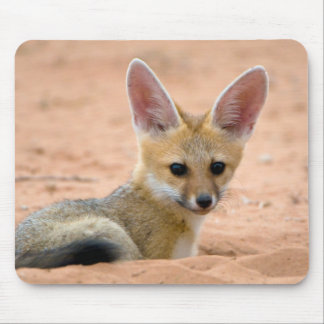 Cape Fox (Vulpes Chama) Pup Peers Inquisitively Mouse Pad