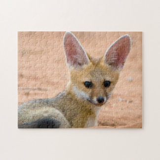 Cape Fox Vulpes Chama Pup Peers Inquisitively Puzzle
