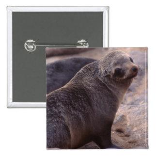 Cape Fur Seal Pinback Button